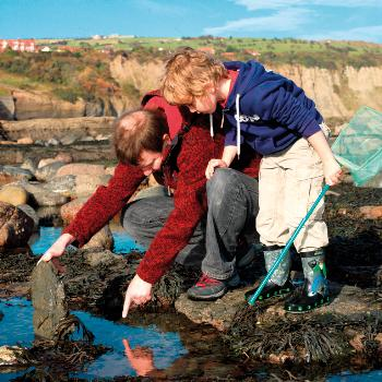 Learn about wildlife and heritage at Robin Hood's Bay